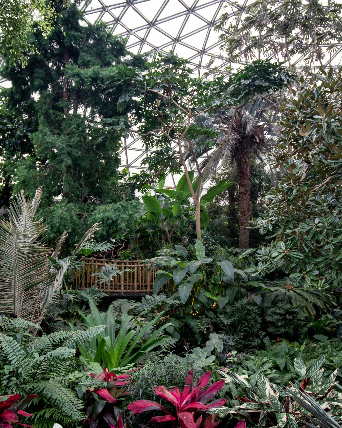 Instagrammable spots Vancouver - Bloedel Conservatory