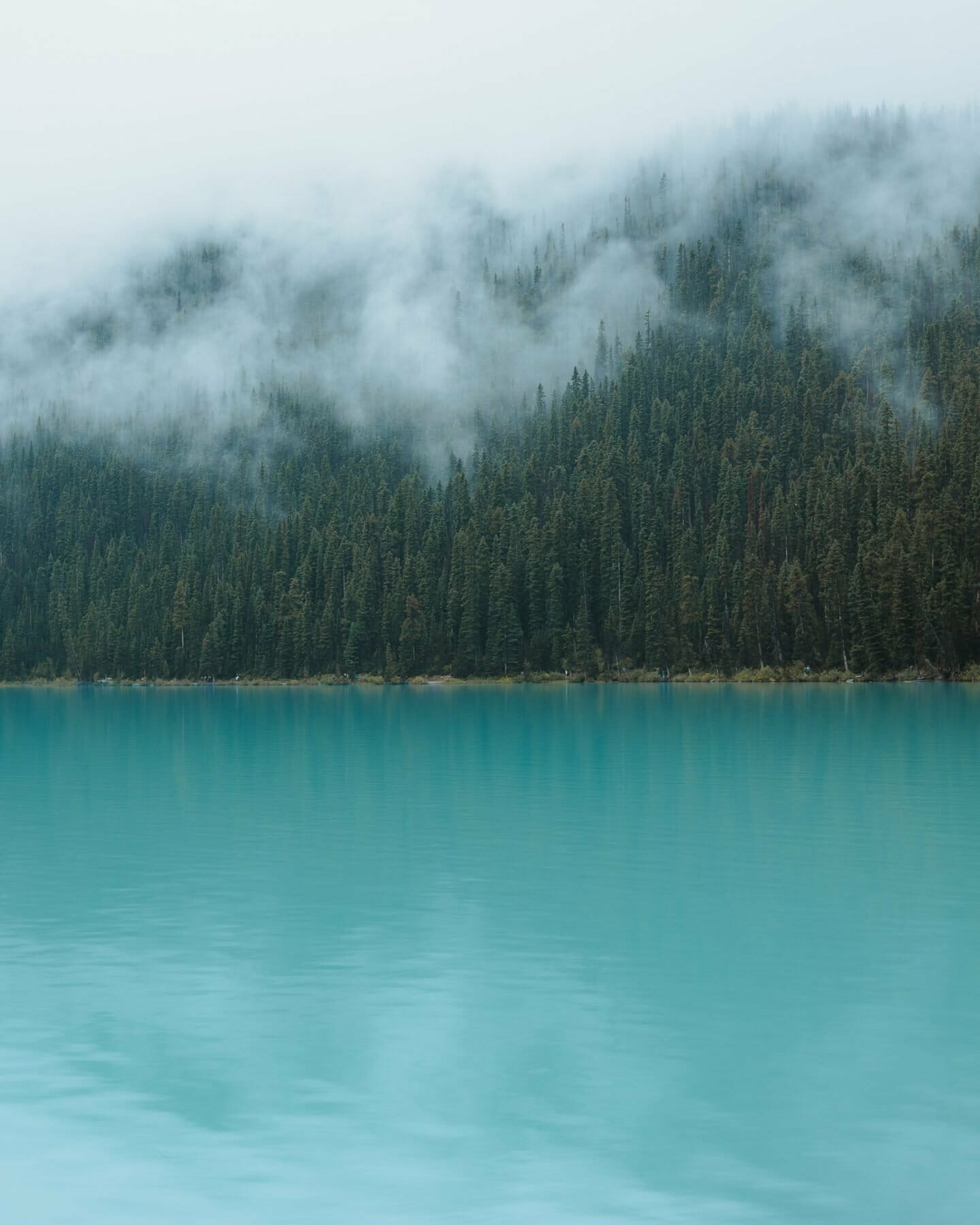 Lake Louise misty forests